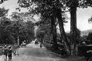 Old Orchard Road